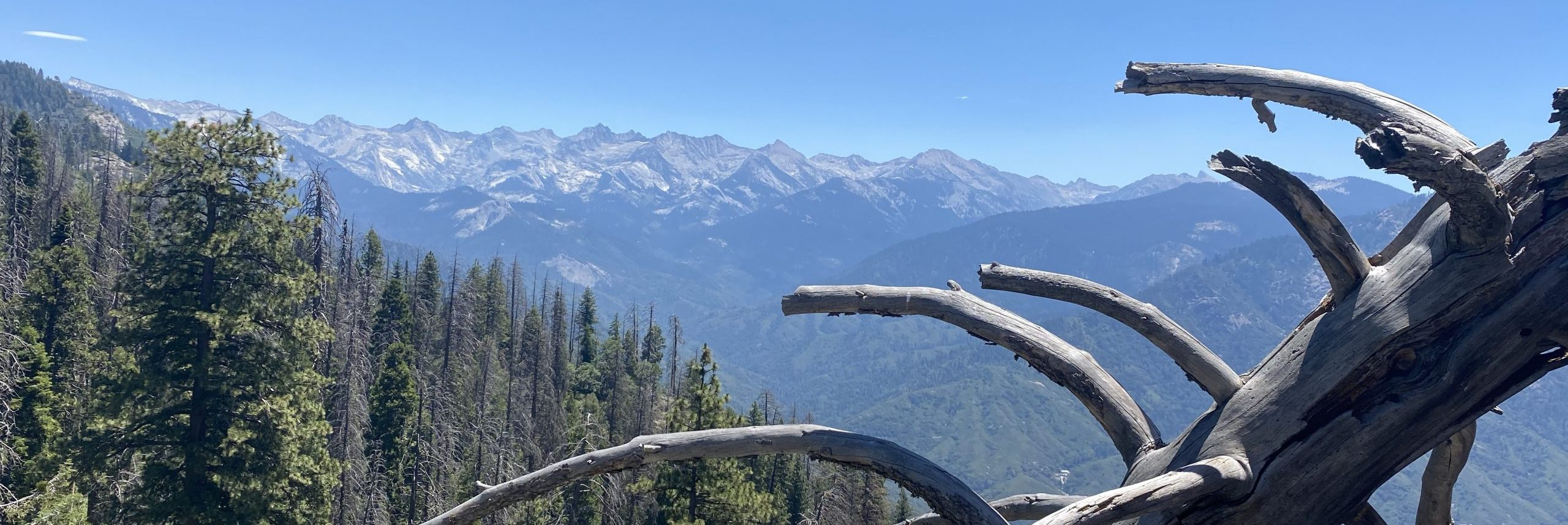 Giant Sequoia National Park - The Traveling Storygirl